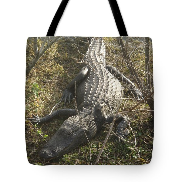 Tote Bag featuring the photograph Alligator by Robert Nickologianis