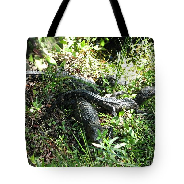 Tote Bag featuring the photograph Alligatorbabys Waiting For Mommy by Christiane Schulze Art And Photography