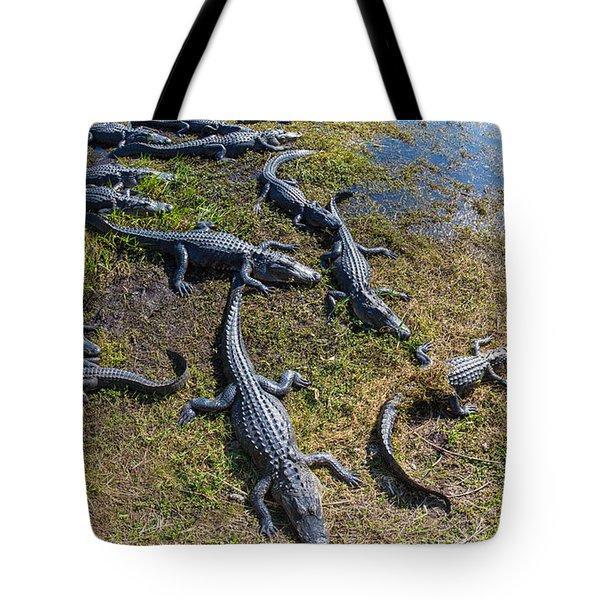 Alligators Along The Anhinga Trail Tote Bag