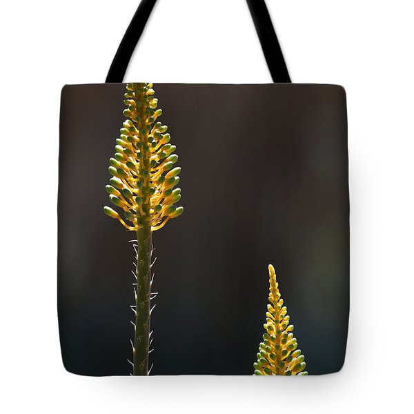 Aloe Plant Tote Bag by Tam Ryan