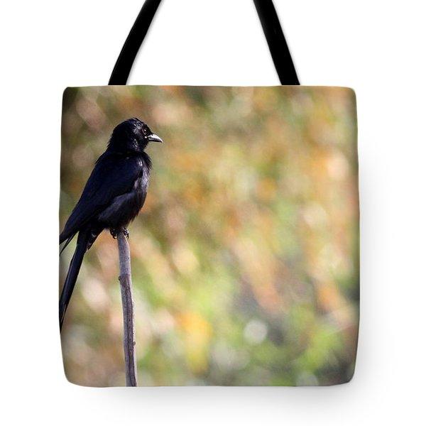 Alone - Black Drongo  Tote Bag by Ramabhadran Thirupattur