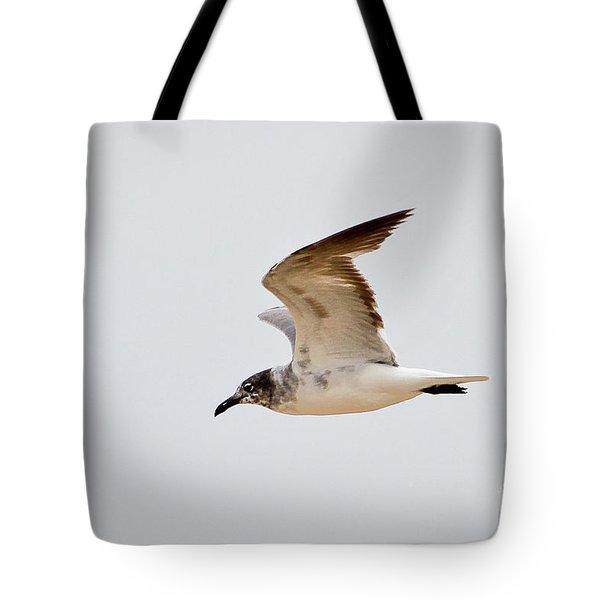 Alongside - Seagull Tote Bag