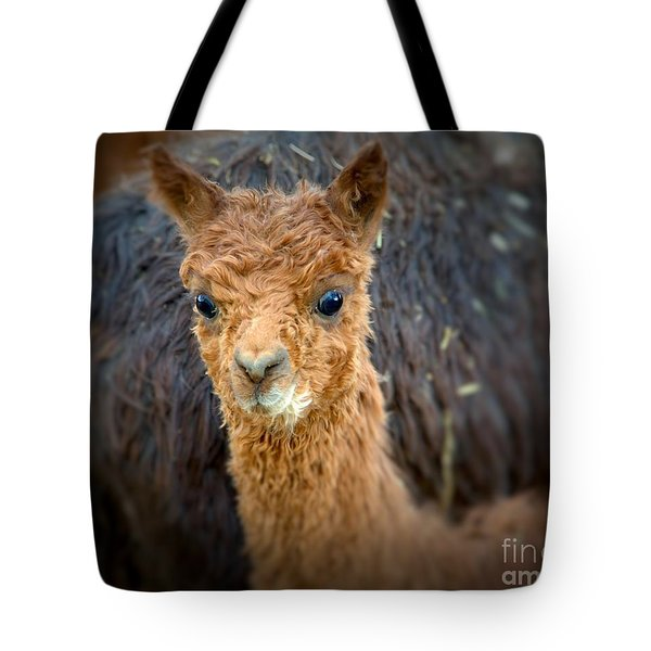 Alpaca Cria  Tote Bag