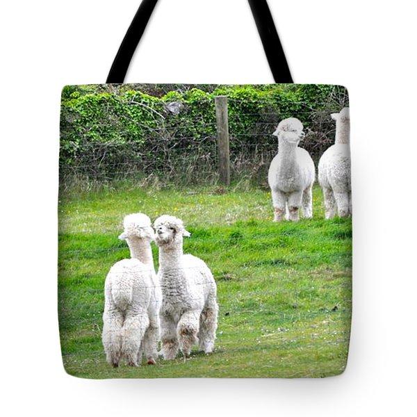 Alpacas In Ireland Tote Bag