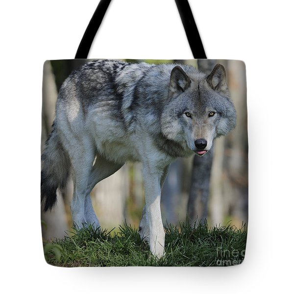 Alpha... Tote Bag by Nina Stavlund
