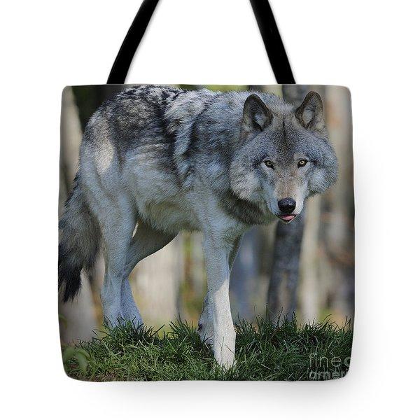 Alpha... Tote Bag