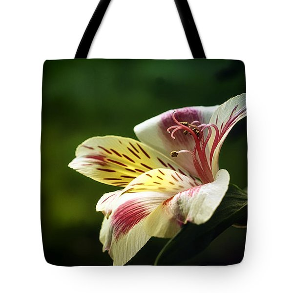 Alstroemeria One Tote Bag