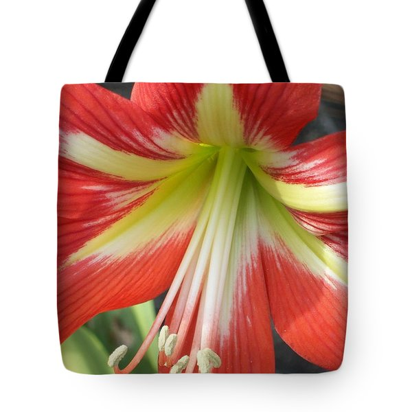 Tote Bag featuring the photograph Amarylis Full Bloom by Belinda Lee