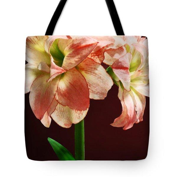 Amaryllis Aphrodite Tote Bag by Susan Savad