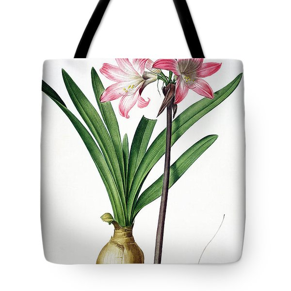 Amaryllis Belladonna From Les Liliacees Engraved By De Gouy Tote Bag by Pierre Joseph Redoute