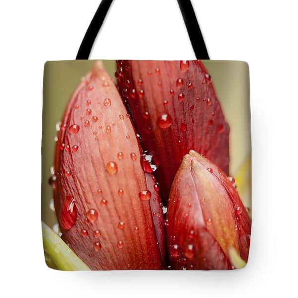Amaryllis Tote Bag by Meg Rousher