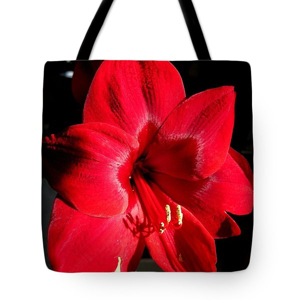 Tote Bag featuring the photograph Amaryllis Named Black Pearl by J McCombie