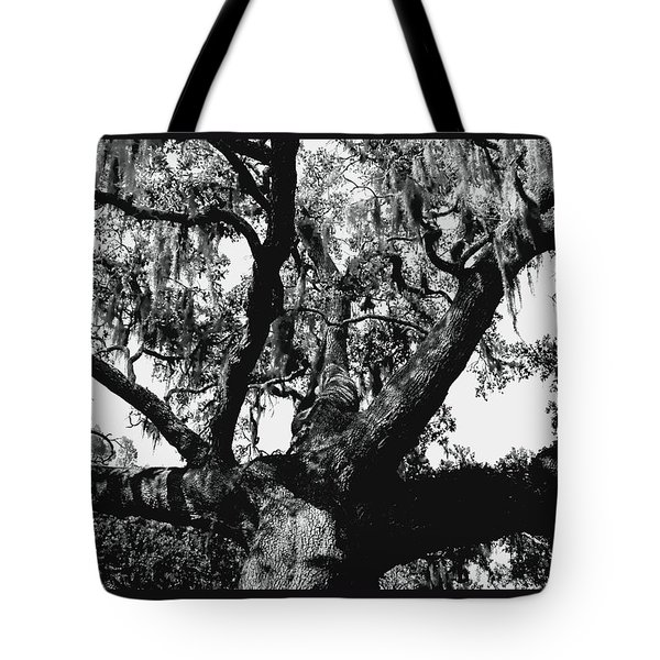 Amazing Oak Tree Tote Bag by Debra Forand
