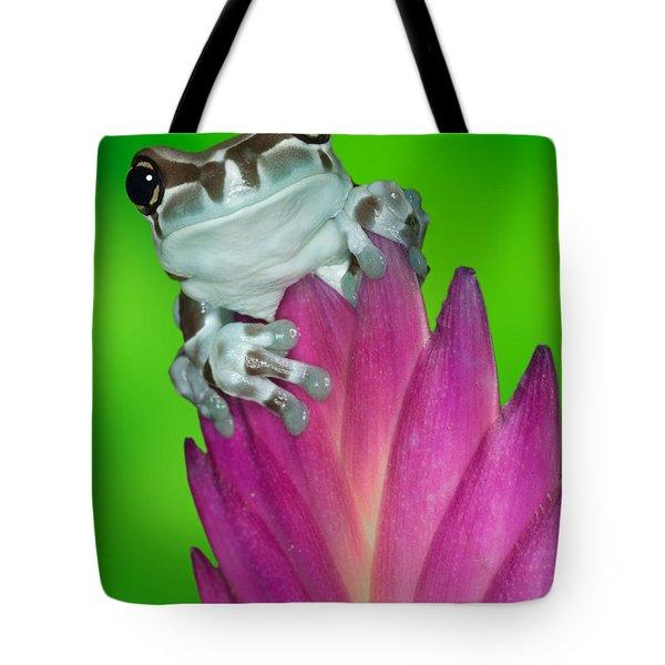 Amazon Milk Frog Trachycephalus Tote Bag by Dennis Flaherty