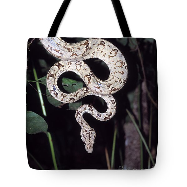 Amazon Tree Boa Tote Bag by James Brunker