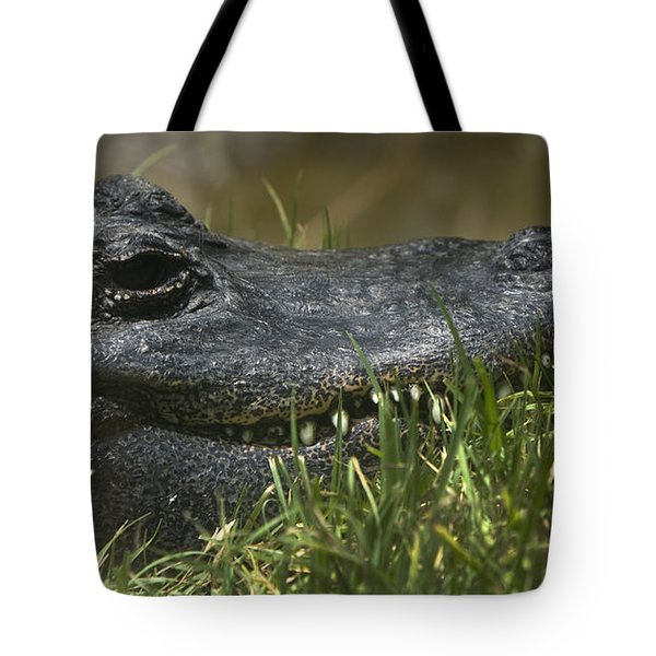 Tote Bag featuring the photograph American Alligator Closeup by David Millenheft