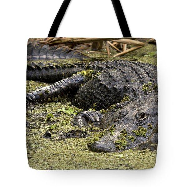 American Alligator Smile Tote Bag