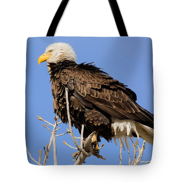 American Bald Eagle Standing Proud Tote Bag by Stephen  Johnson