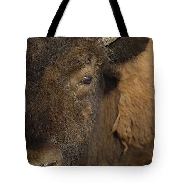 American Bison  Male Wyoming Tote Bag by Pete Oxford