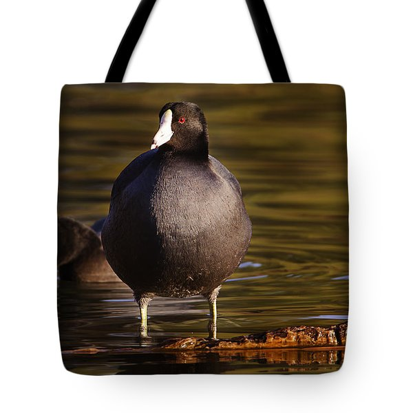 Tote Bag featuring the photograph American Coot  by Brian Cross