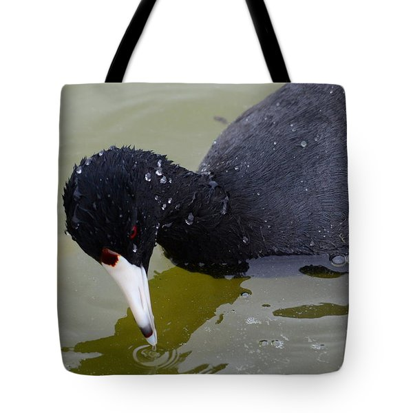 Tote Bag featuring the photograph American Coot by Debra Martz