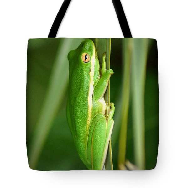 American Green Tree Frog Tote Bag by Kim Pate