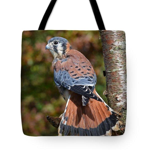 American Kestral Portrait Tote Bag