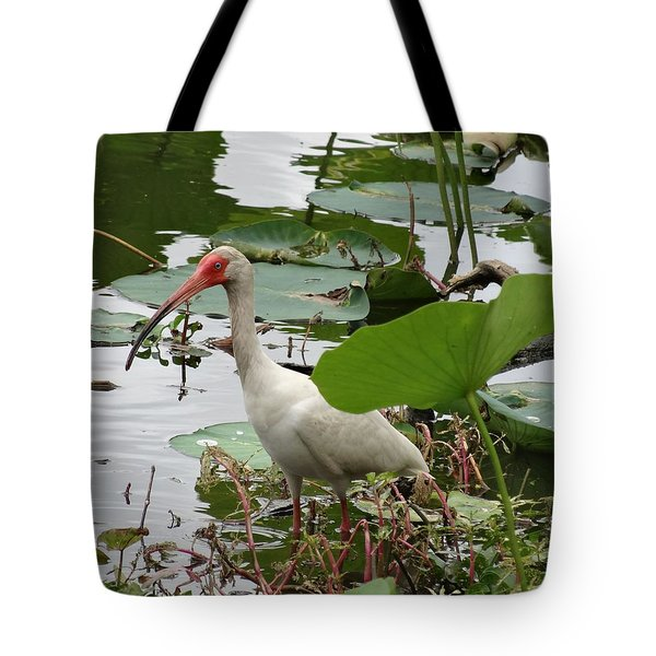 American White Ibis In Brazos Bend Tote Bag