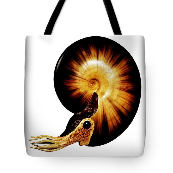 Ammonite Tote Bag by Chase Studio