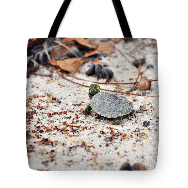 Among Acorns Tote Bag by Al Powell Photography USA