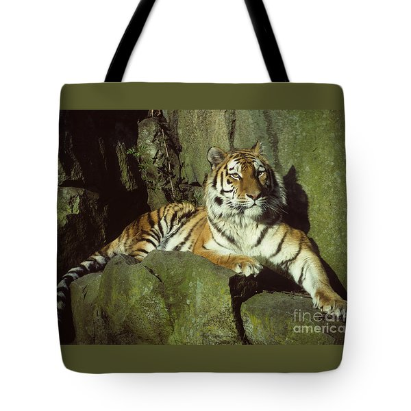 Tote Bag featuring the photograph Amur Tiger by Phil Banks