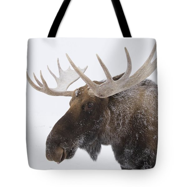 An Elk Cervus Canadensis With Snow Tote Bag