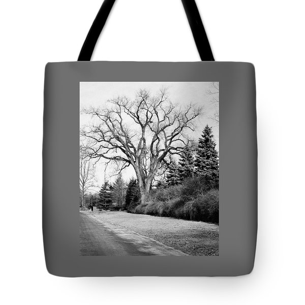 An Elm Tree At The Side Of A Road Tote Bag
