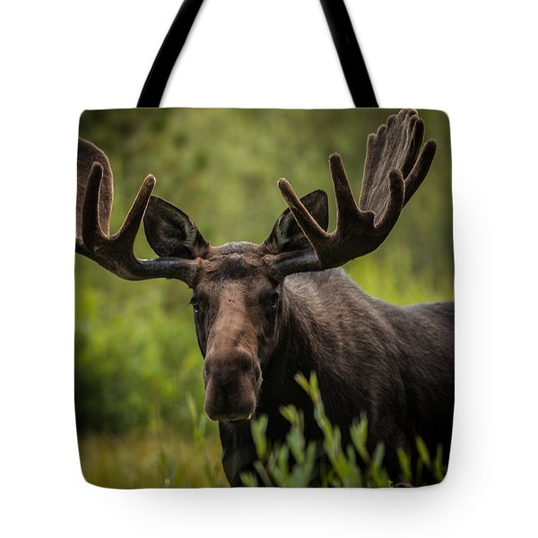 An Majestic Bull Tote Bag by Steven Reed