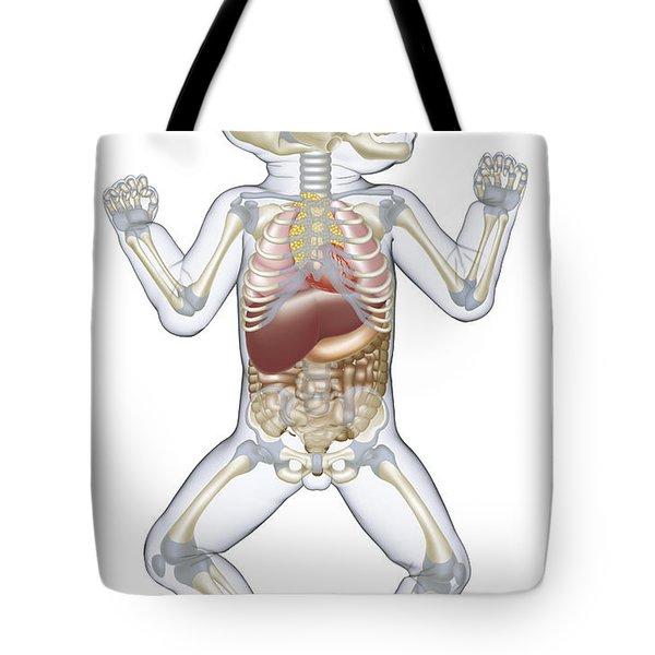 Anatomy Of A Newborn Baby Tote Bag