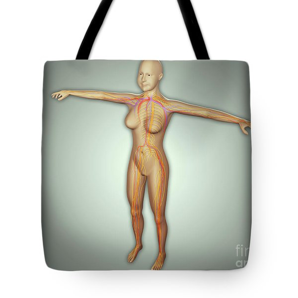 Anatomy Of Female Body With Arteries Tote Bag by Stocktrek Images