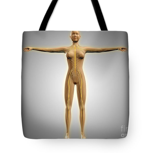 Anatomy Of Female Body With Nervous Tote Bag by Stocktrek Images