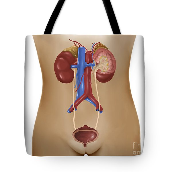 Anatomy Of Female Urinary System Tote Bag by Stocktrek Images