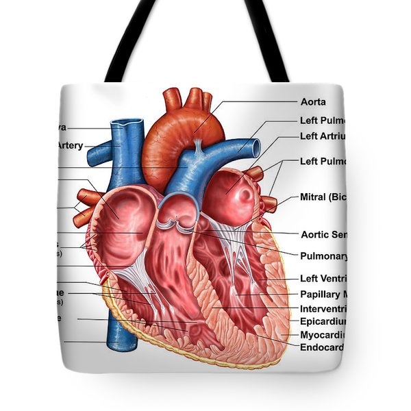 Anatomy Of Heart Interior, Frontal Tote Bag by Stocktrek Images