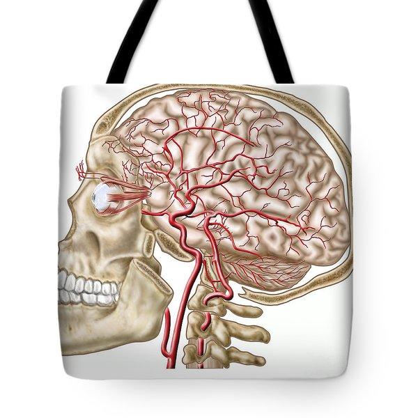 Anatomy Of Human Skull, Eyeball Tote Bag by Stocktrek Images