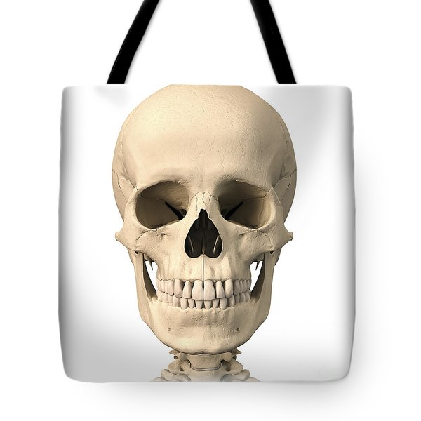 Anatomy Of Human Skull, Front View Tote Bag