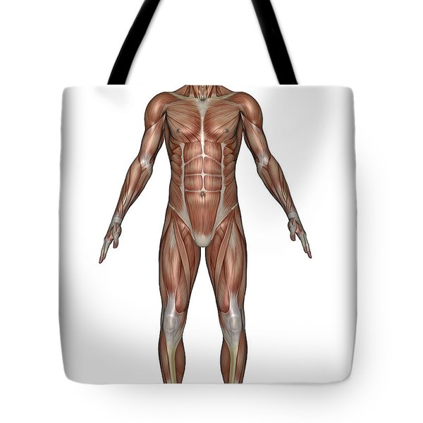 Anatomy Of Male Muscular System, Front Tote Bag by Elena Duvernay