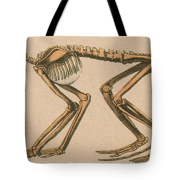 Ancient Monkey Mesopithecus Pentelicus Tote Bag by Science Source