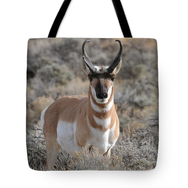 Tote Bag featuring the photograph ...and The Antelope Play by Dorrene BrownButterfield