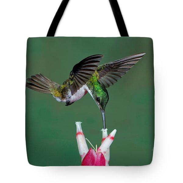 Andean Emerald Hummingbird Tote Bag by Anthony Mercieca