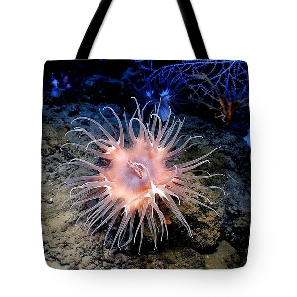 Tote Bag featuring the photograph Anemone Sea Life Sea Ocean Water Underwater by Paul Fearn