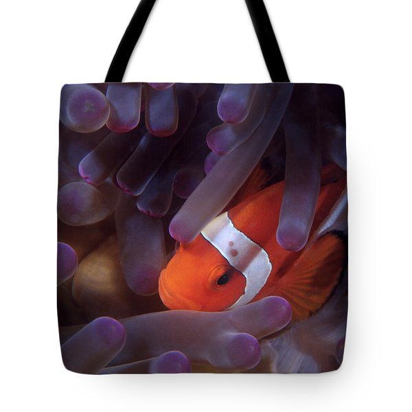 Anemonefish Tote Bag
