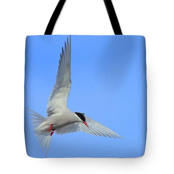 Antarctic Tern Tote Bag by Tony Beck