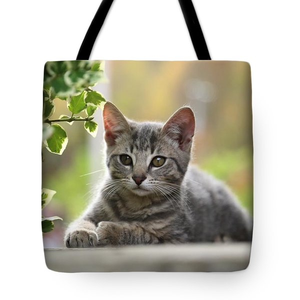 Anticipation  Tote Bag by Dennis Baswell