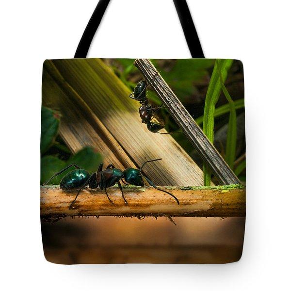 Ants Adventure 2 Tote Bag by Bob Orsillo